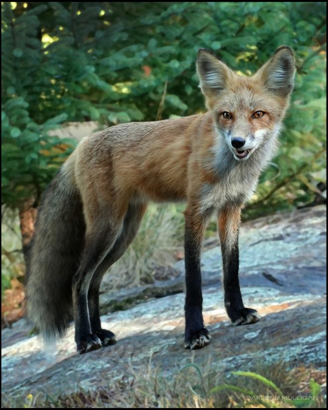 FoxonRockDSC01694Sm